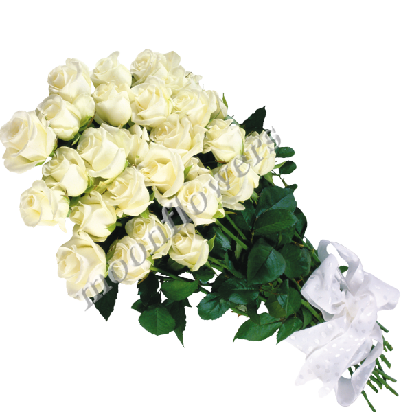 Купить белые розы в николаеве доставка цветов в подмосковье круглосуточно